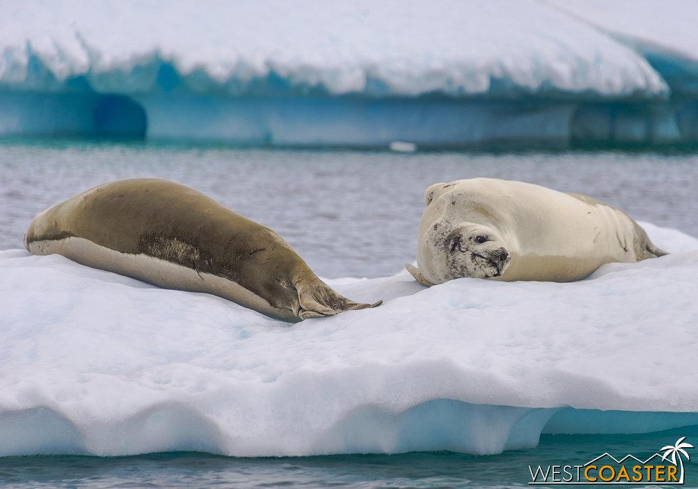 Antarctica-18_0609-0023.jpg