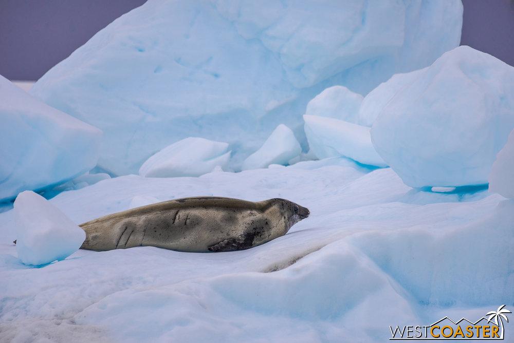 Antarctica-18_0609-0025.jpg