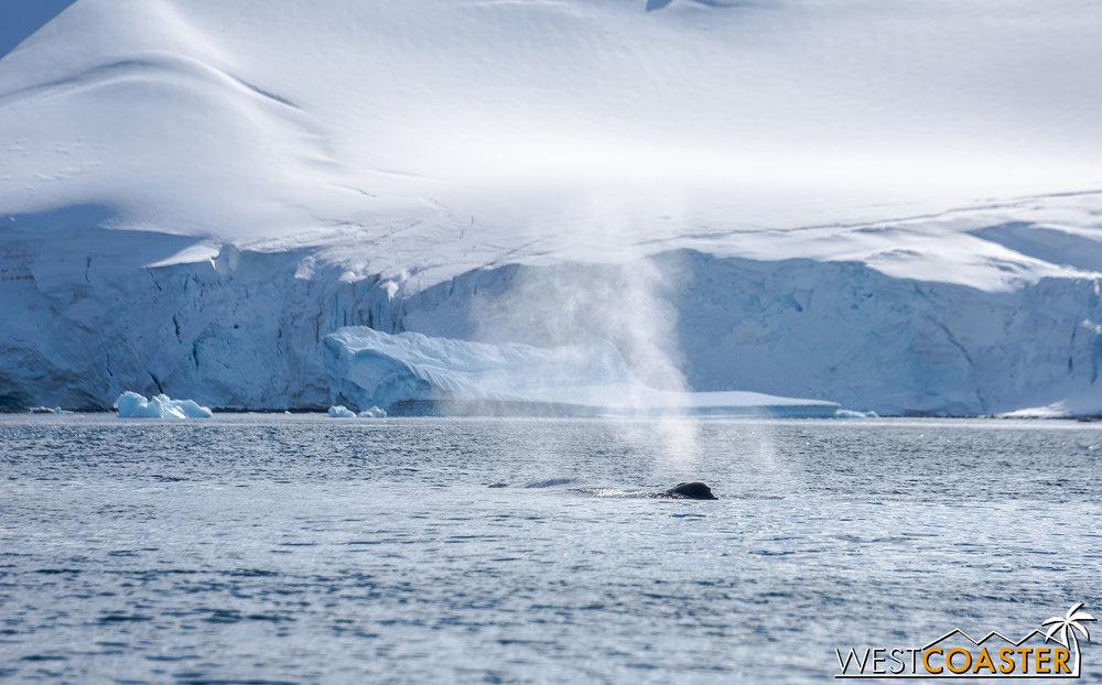 Antarctica-18_0726-0003.jpg