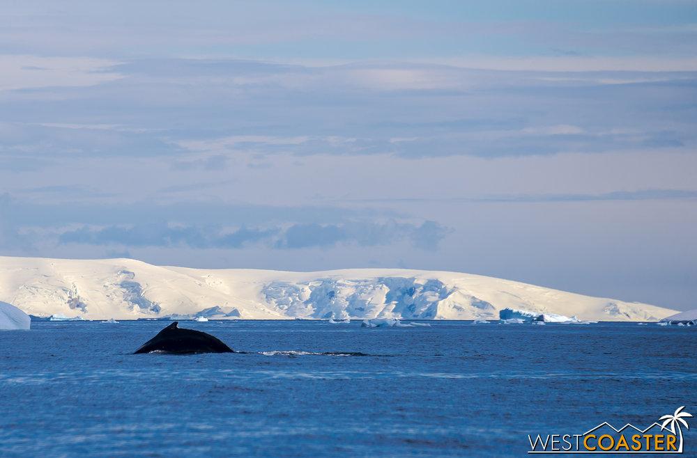 Antarctica-18_0726-0009.jpg
