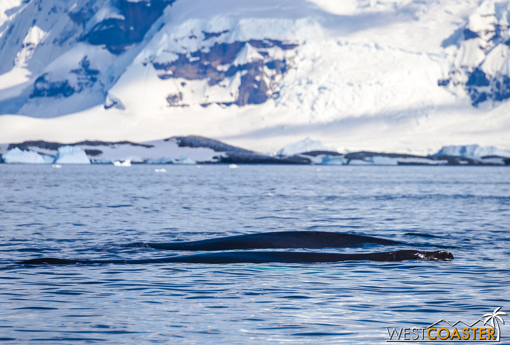 Antarctica-18_0726-0016.jpg