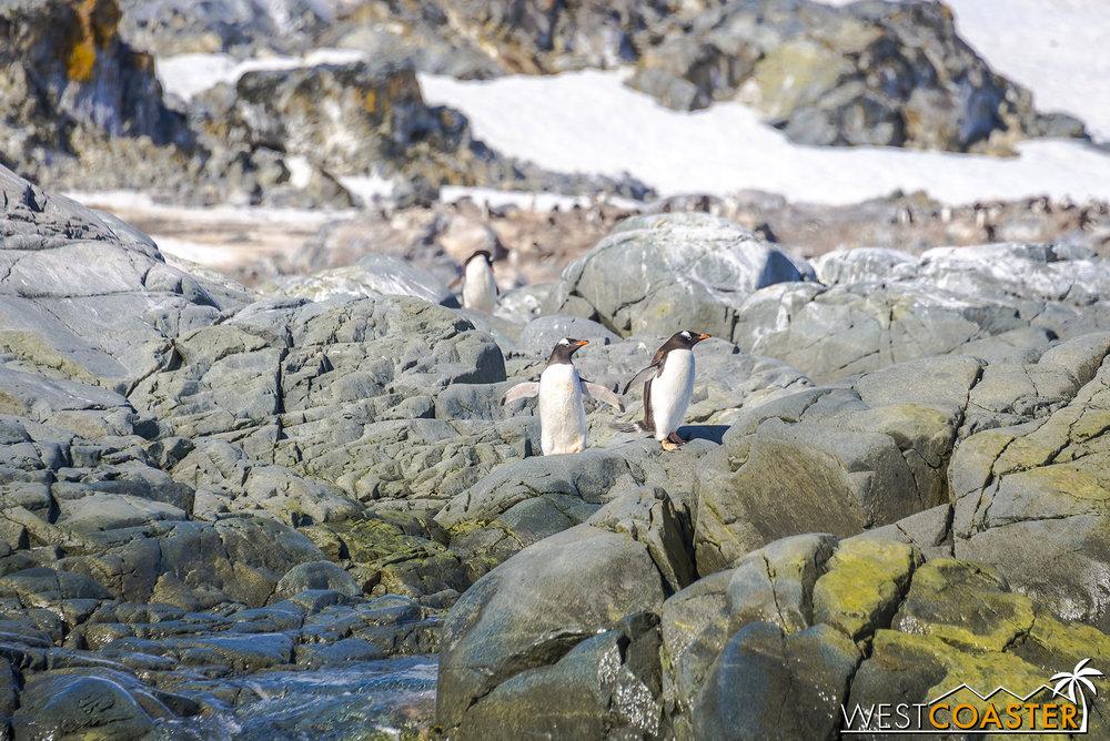 Antarctica-18_0726-0026.jpg