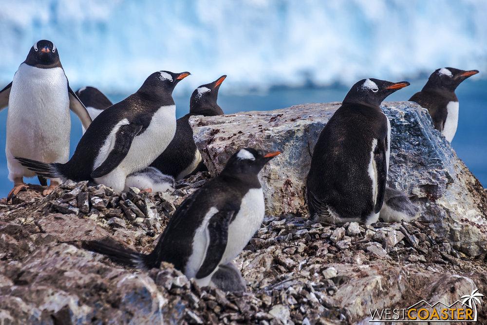 Antarctica-18_0726-0038.jpg