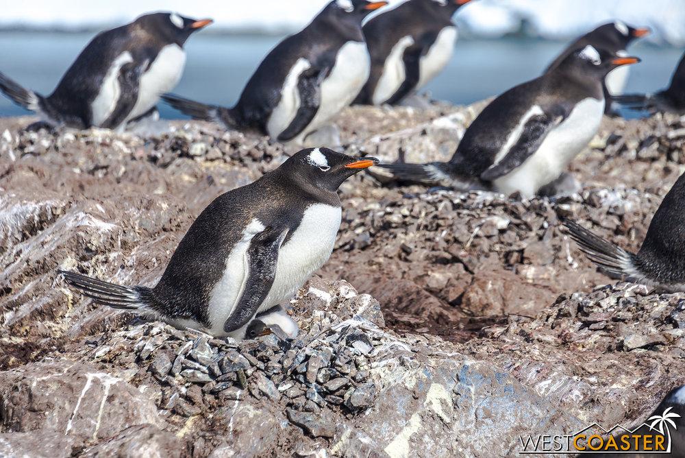Antarctica-18_0726-0037.jpg