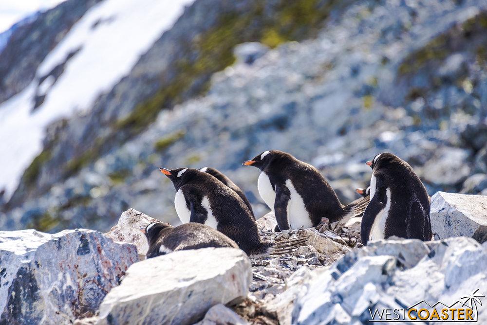 Antarctica-18_0726-0039.jpg
