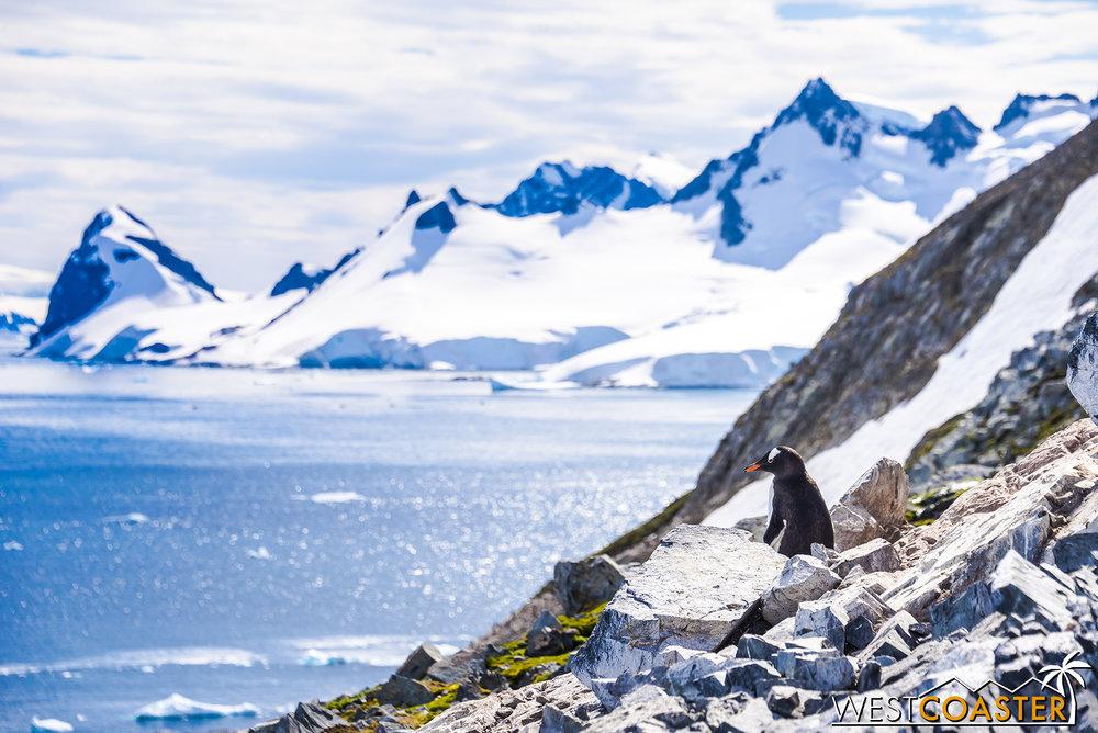 Antarctica-18_0726-0040.jpg