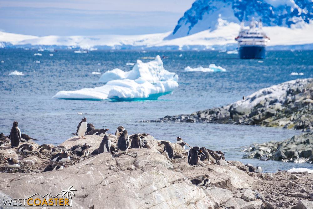 Antarctica-18_0726-0047.jpg