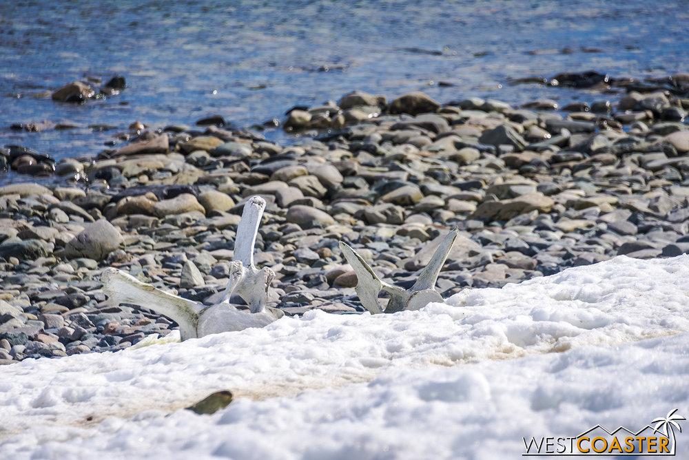 Antarctica-18_0726-0046.jpg