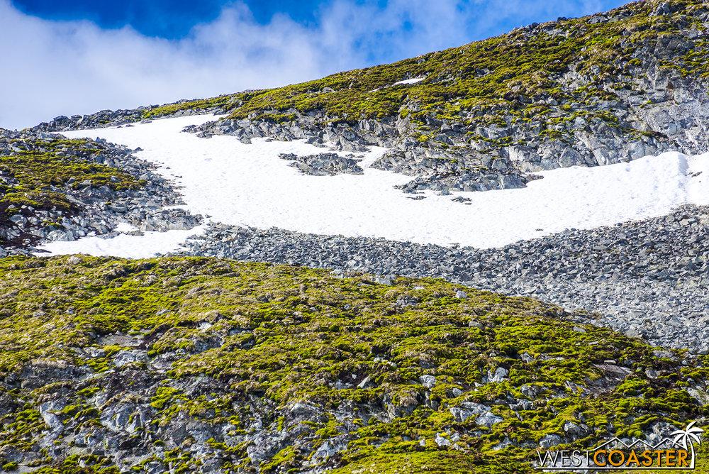 Antarctica-18_0726-0049.jpg