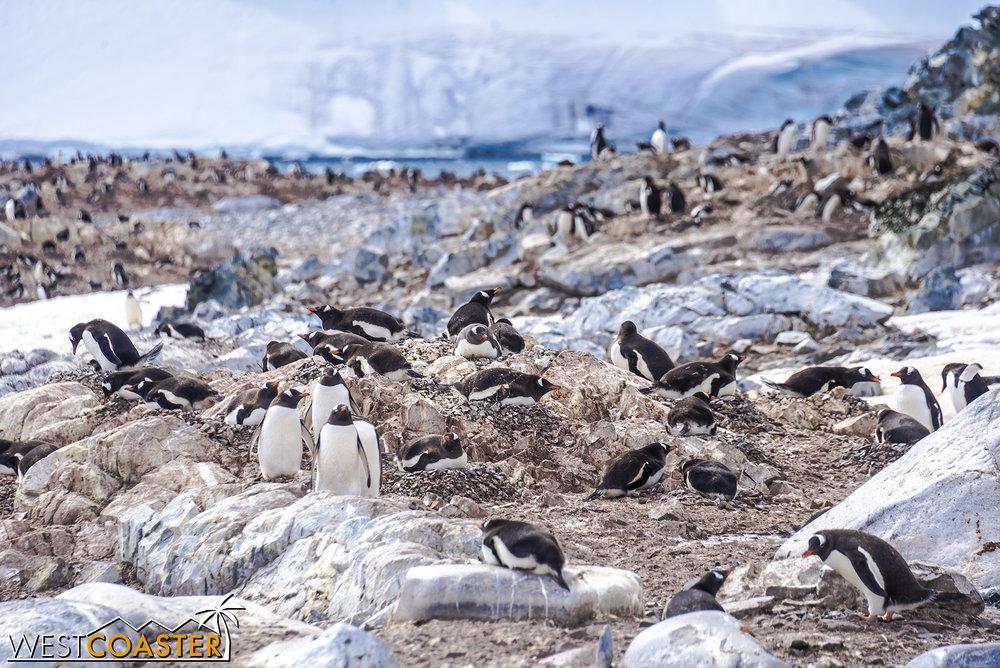 Antarctica-18_0726-0050.jpg