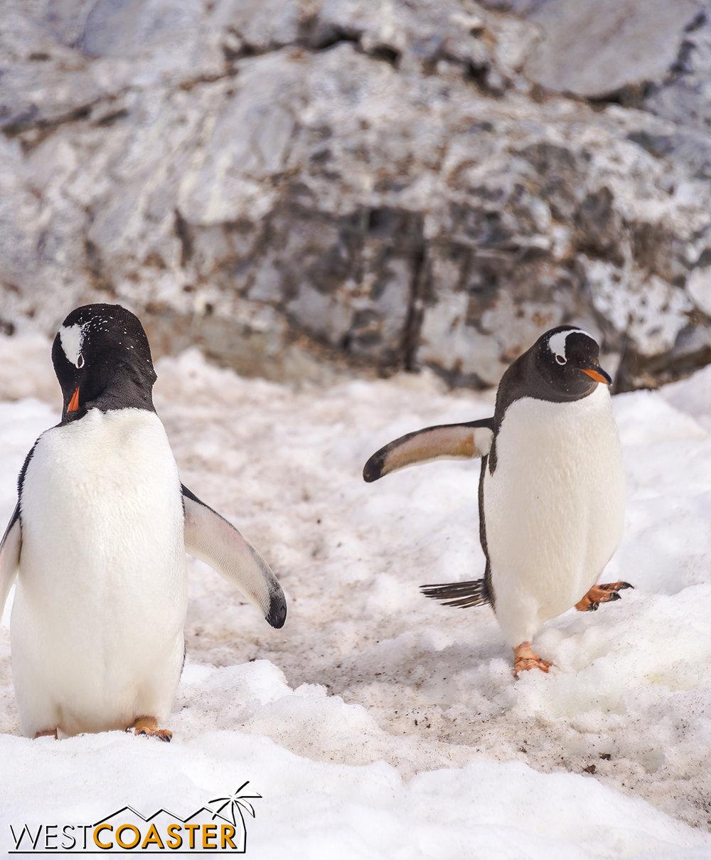 Antarctica-18_0726-0052.jpg