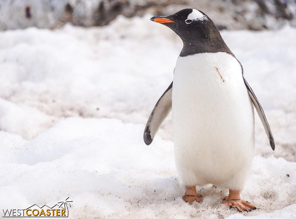 Antarctica-18_0726-0053.jpg