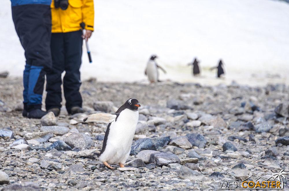 Antarctica-18_0726-0057.jpg