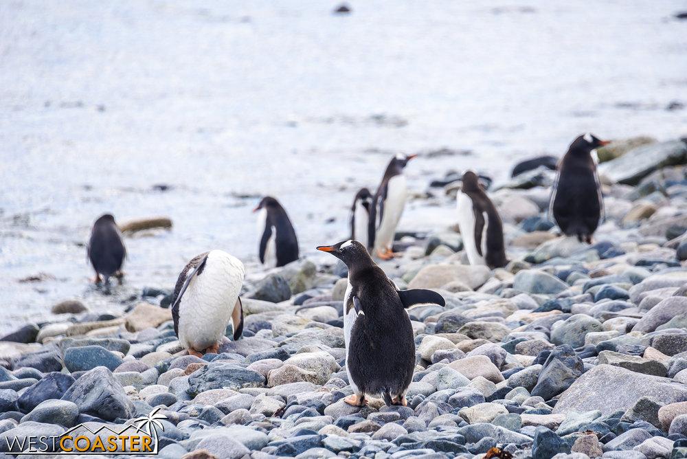 Antarctica-18_0726-0059.jpg
