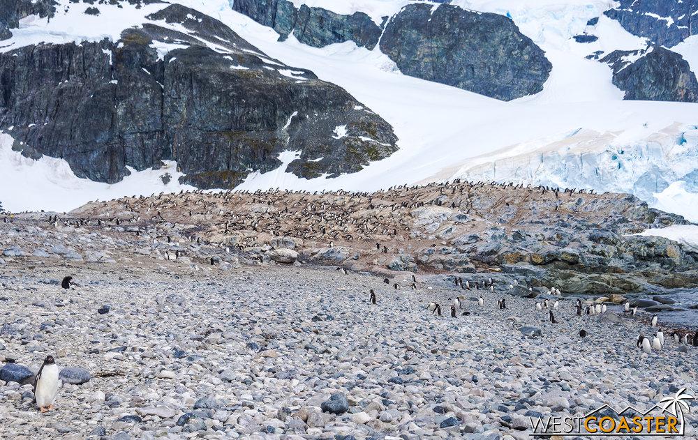 Antarctica-18_0726-0058.jpg