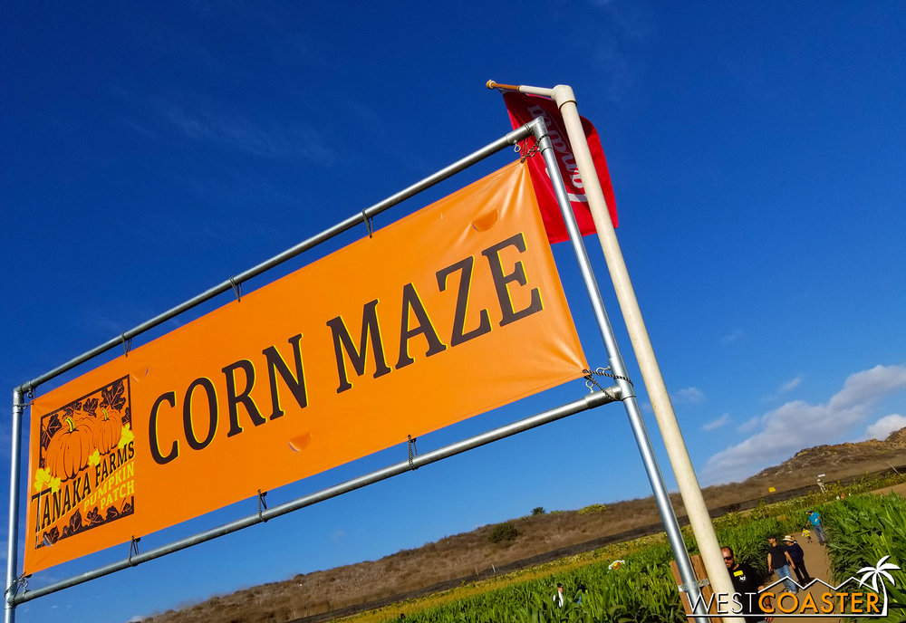 More like Corn  Maize … amIrite??