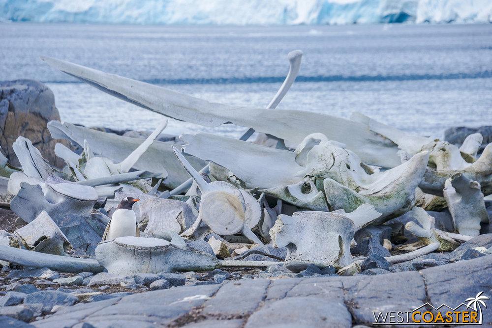 Antarctica-19_0103-0025.jpg