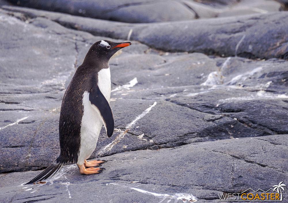 Antarctica-19_0103-0027.jpg