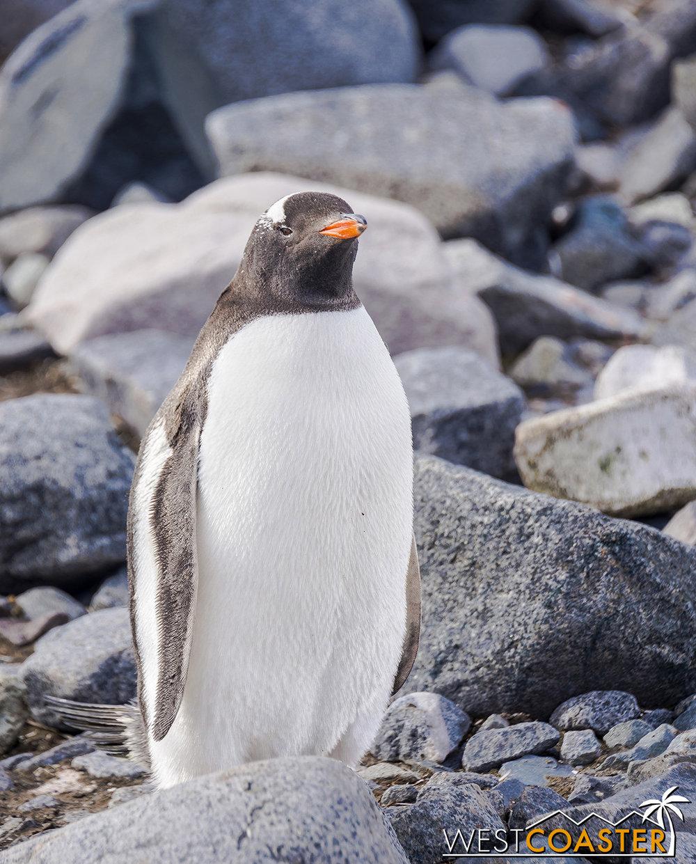 Antarctica-19_0103-0028.jpg