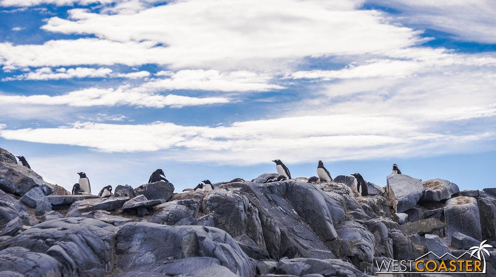 Antarctica-19_0103-0032.jpg