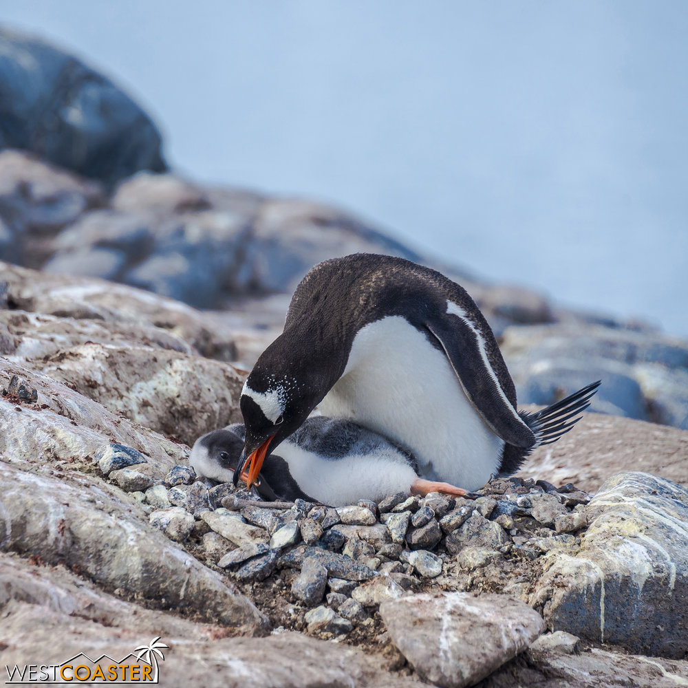 Antarctica-19_0103-0038.jpg