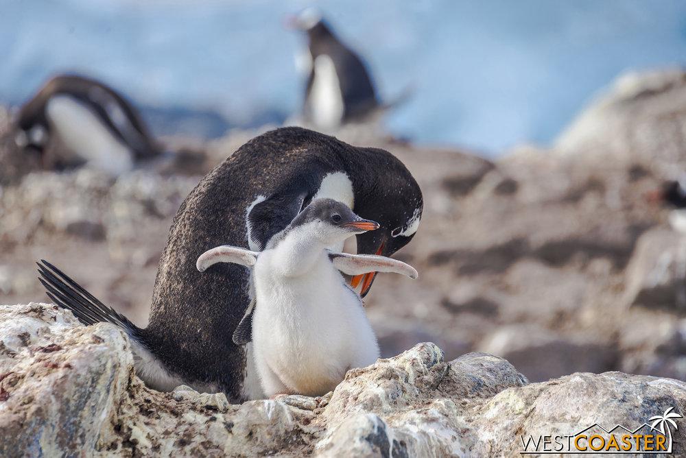 Antarctica-19_0103-0041.jpg