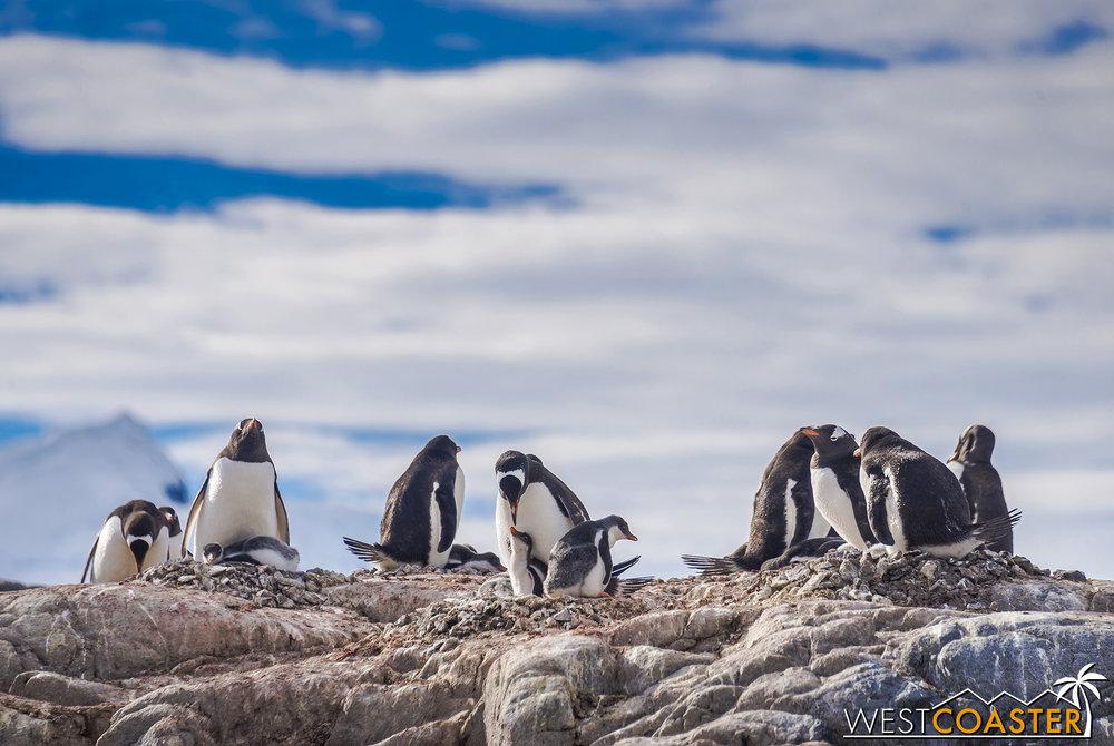 Antarctica-19_0103-0044.jpg