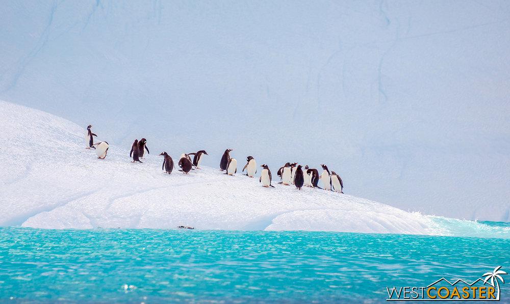Antarctica-19_0109-0007.jpg