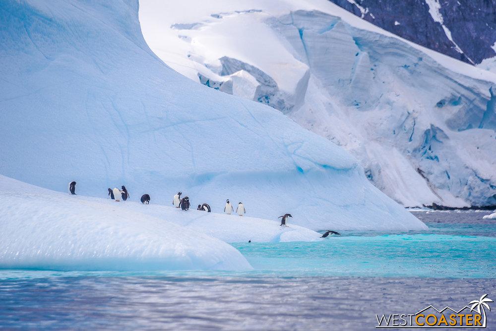 Antarctica-19_0109-0010.jpg
