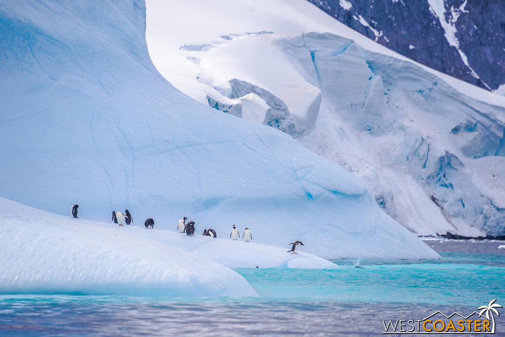 Antarctica-19_0109-0011.jpg
