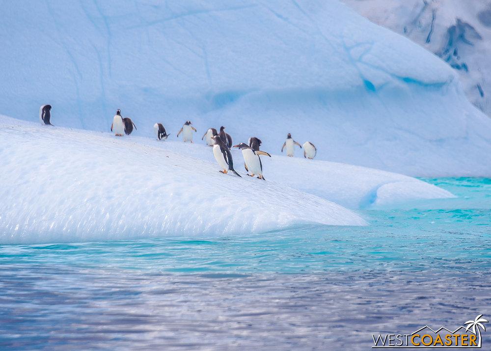 Antarctica-19_0109-0012.jpg