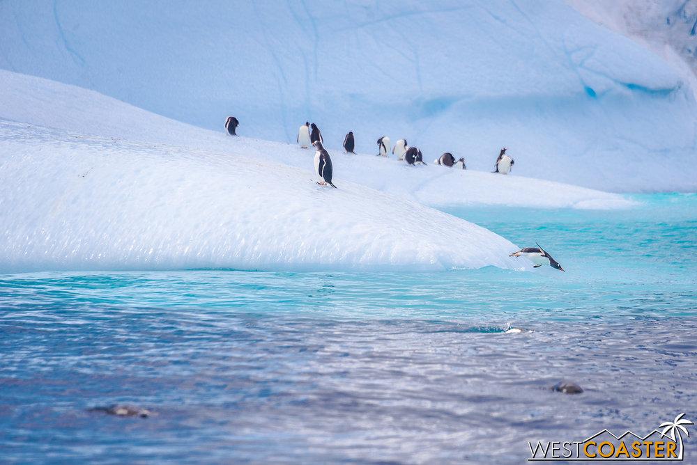 Antarctica-19_0109-0014.jpg