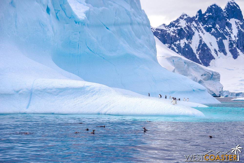 Antarctica-19_0109-0013.jpg