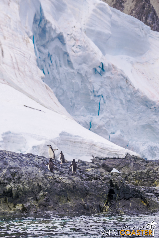 Antarctica-19_0109-0019.jpg