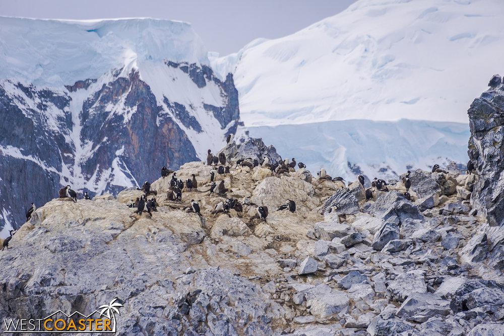 Antarctica-19_0109-0023.jpg