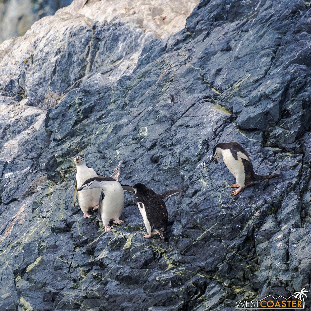 Antarctica-19_0109-0029.jpg