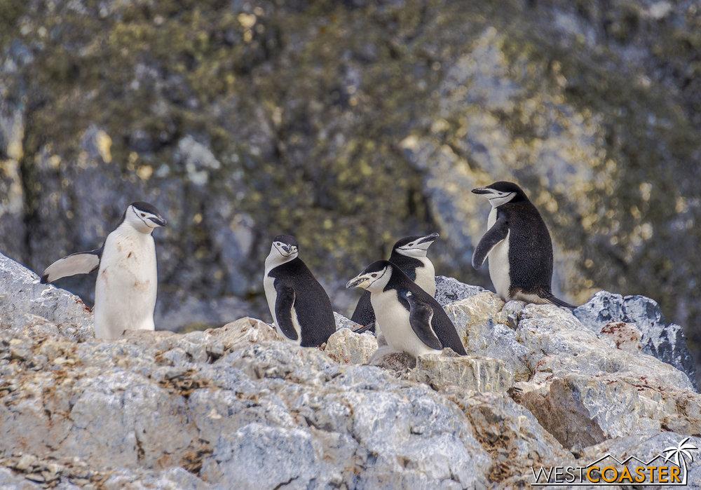 Antarctica-19_0109-0031.jpg
