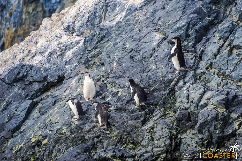 Antarctica-19_0109-0030.jpg