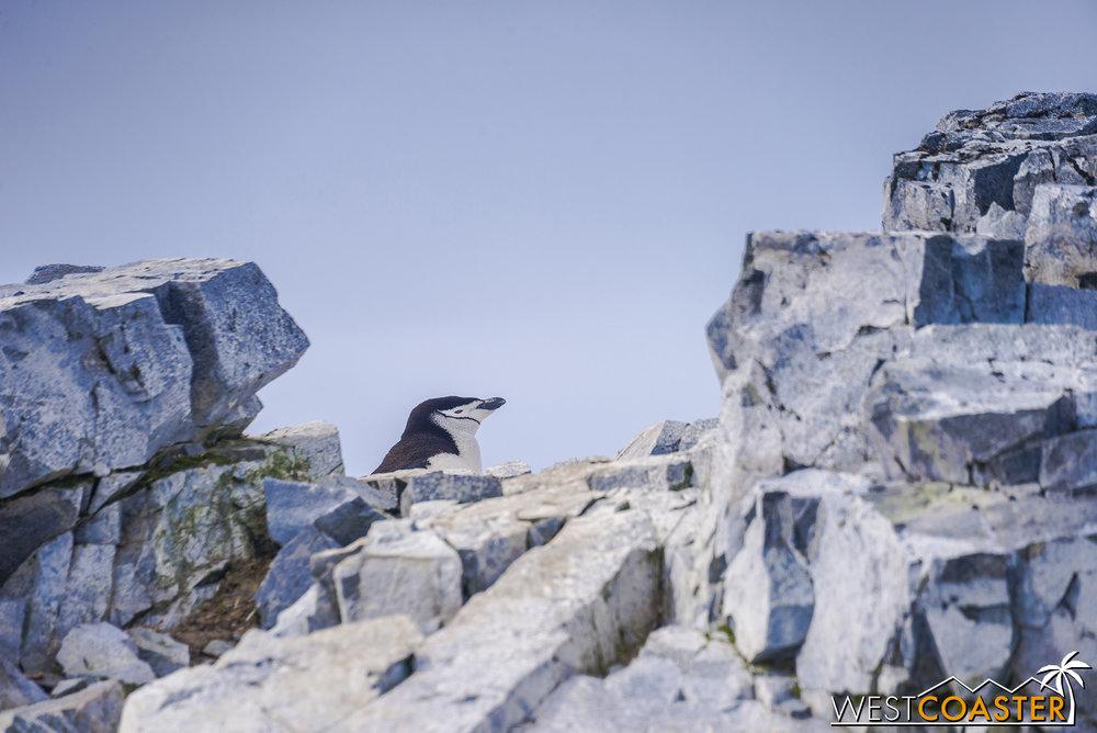 Antarctica-19_0109-0038.jpg