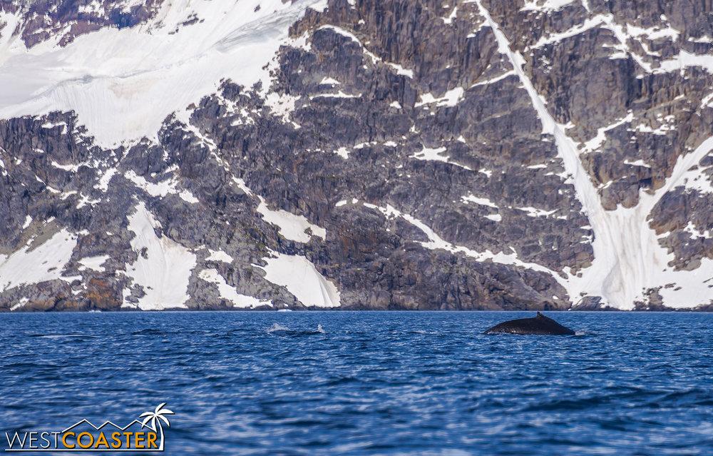 Antarctica-19_0114-B-WilheminaBay-0015.jpg