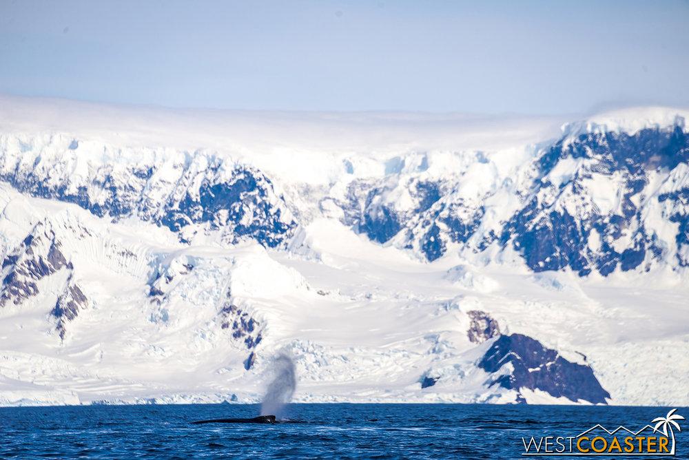 Antarctica-19_0114-B-WilheminaBay-0018.jpg