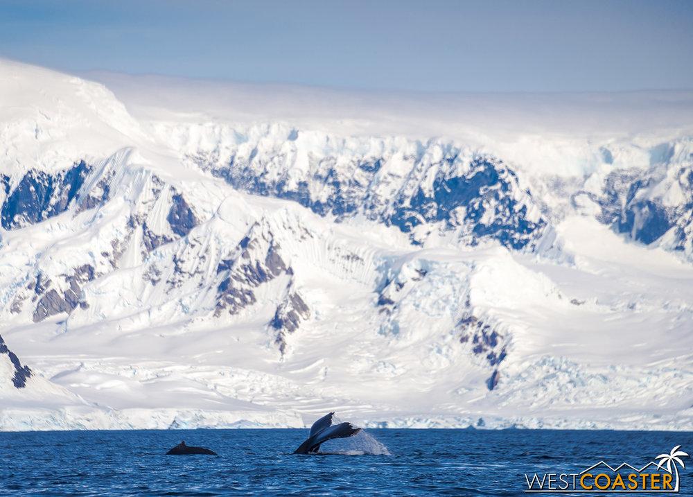 Antarctica-19_0114-B-WilheminaBay-0021.jpg