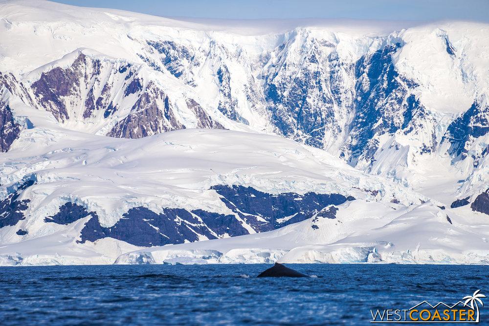 Antarctica-19_0114-B-WilheminaBay-0022.jpg