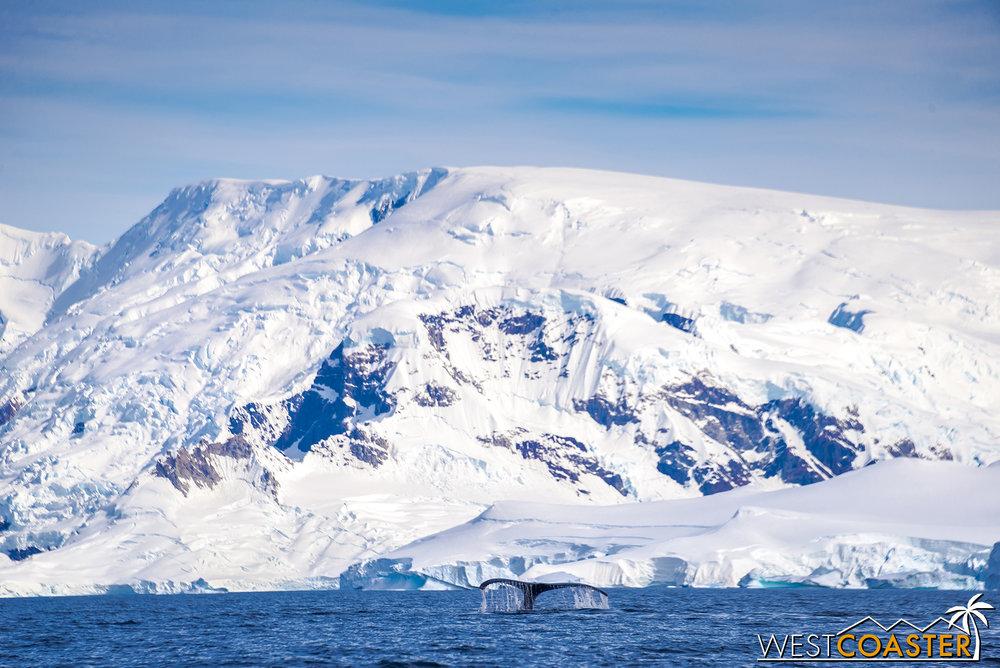 Antarctica-19_0114-B-WilheminaBay-0023.jpg