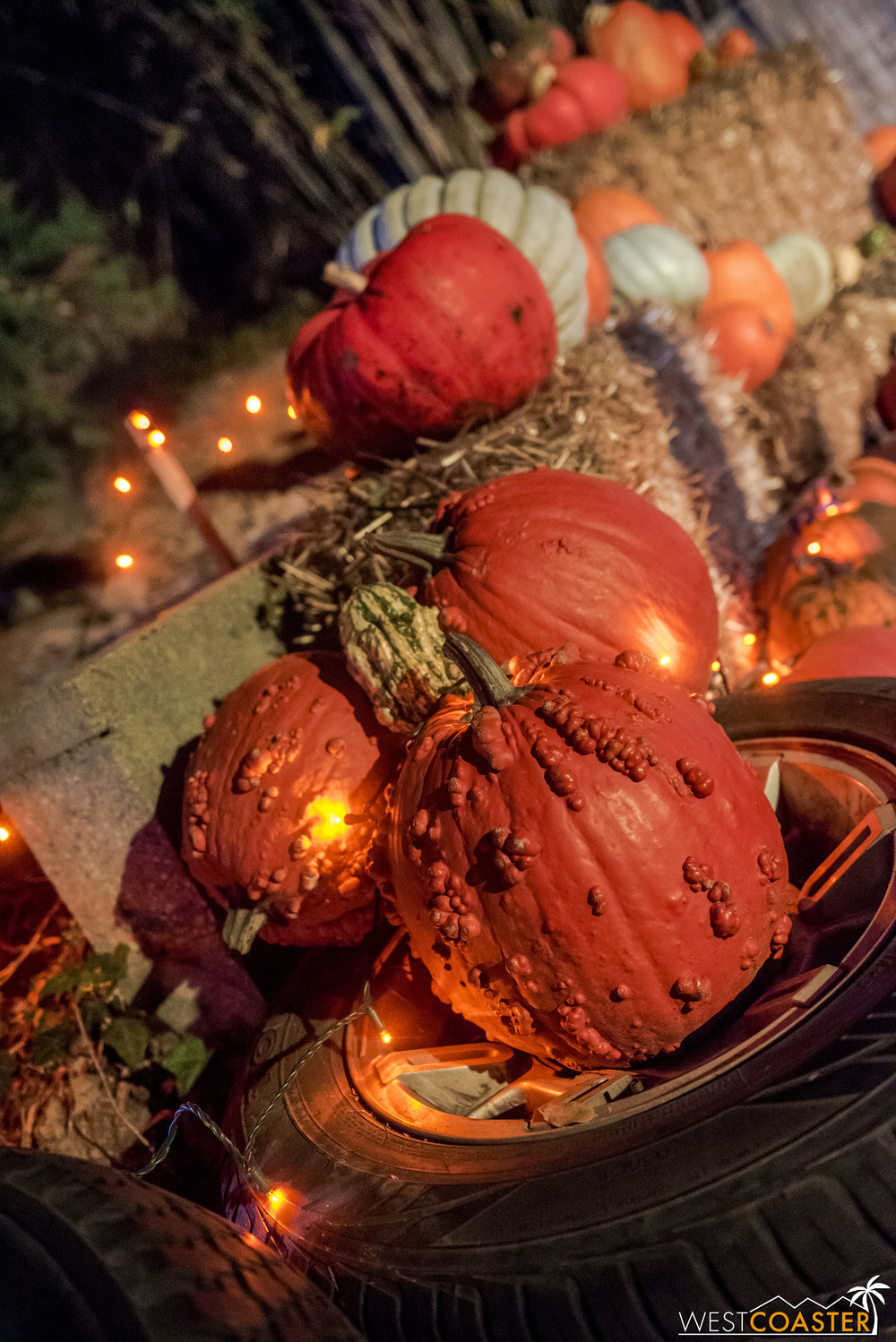 The other area with real pumpkins…