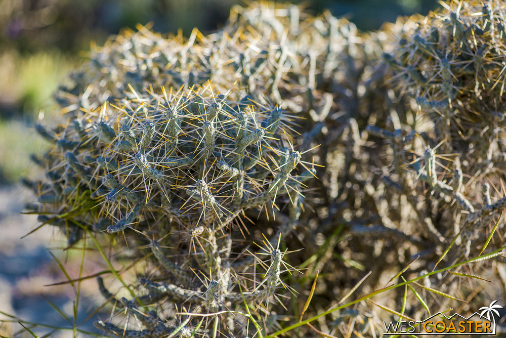 There are also more cacti out here.