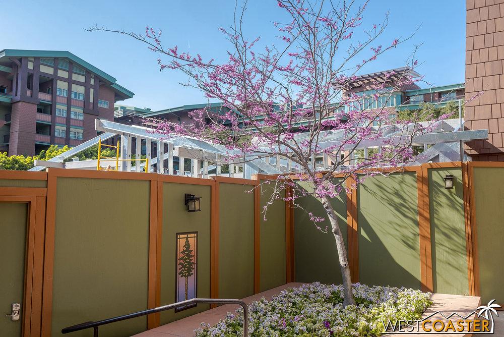 This tabebuia tree is blooming.