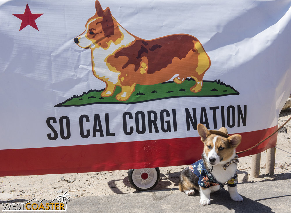 The SoCal Corgi Nation was in full force, which meant Corgis everywhere!