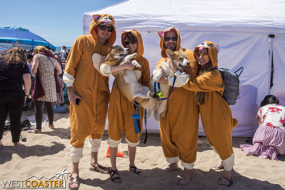 A dog family of dogs pose after a contest round.