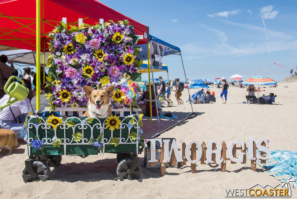 The backdrop for   @Tworgis   served as a photo op for other dogs if their owners so desired.